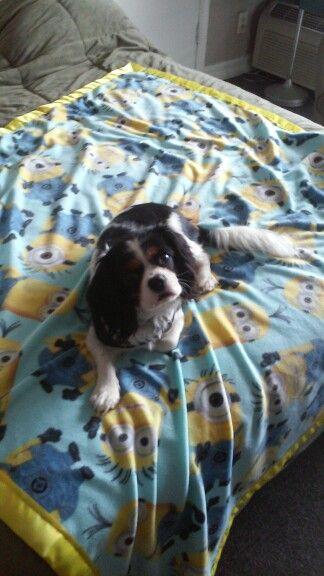Spencer got a new doggie blanket today.