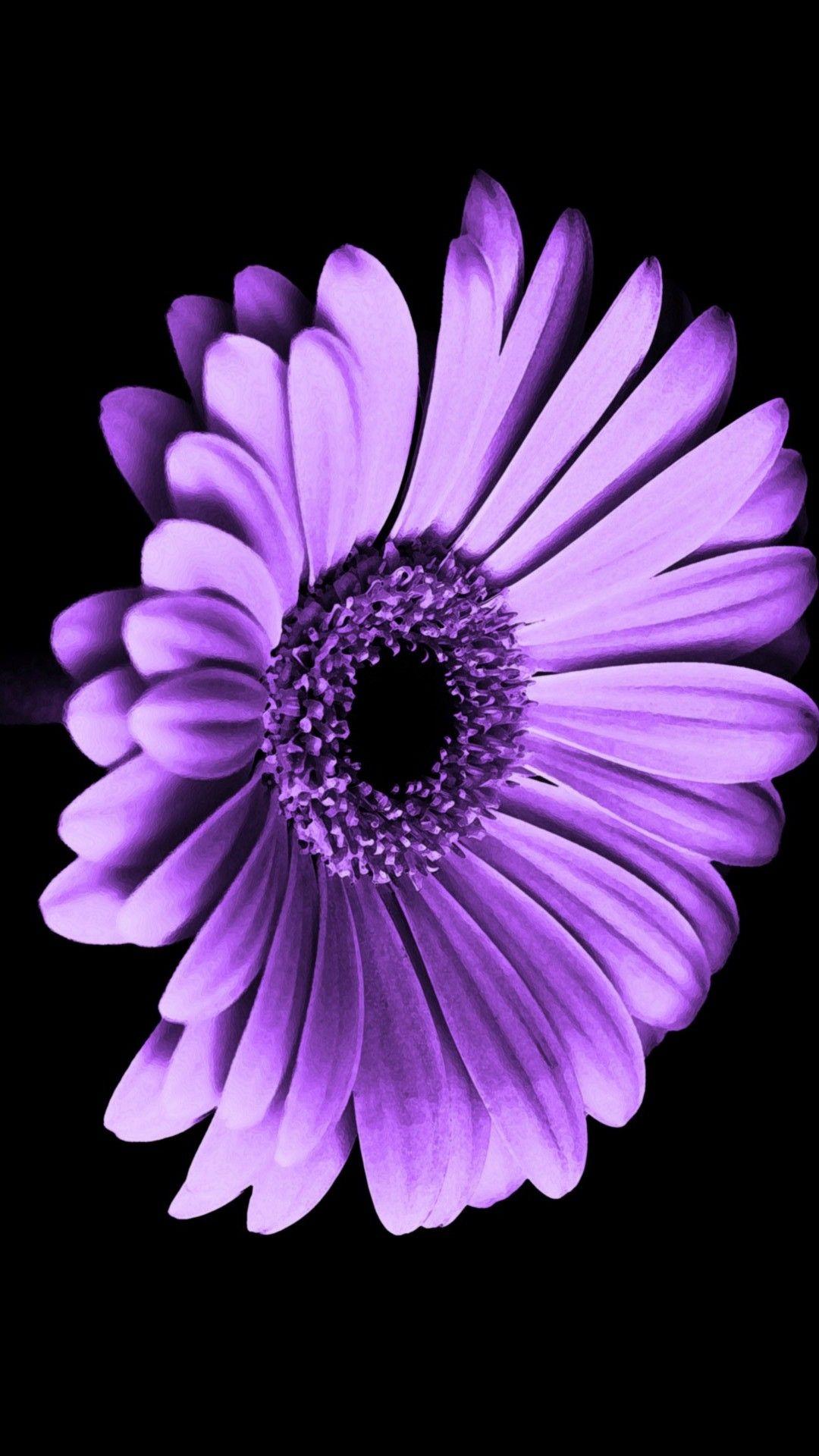 Violet Daisy Flower iPhone Wallpaper Best iPhone