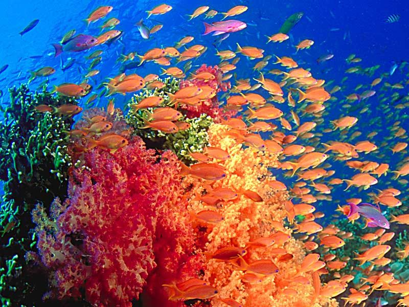 Beautiful shot of fish and coral from National Geographic