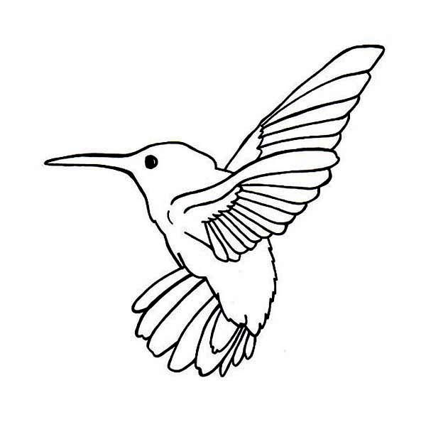 Allens Hummingbird Coloring Page Kids Play Color Hummingbird