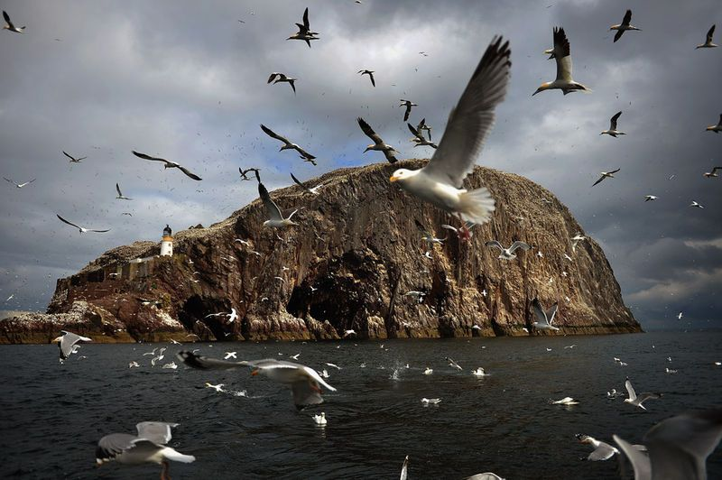 Bass Rock, Dunbar, Scotland