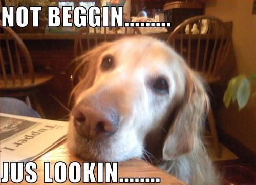 Dogs Begging For Food Funny Memes Google Search Dogs Golden