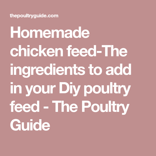 Homemade Chicken Feed The Ingredients To Add In Your Diy Poultry