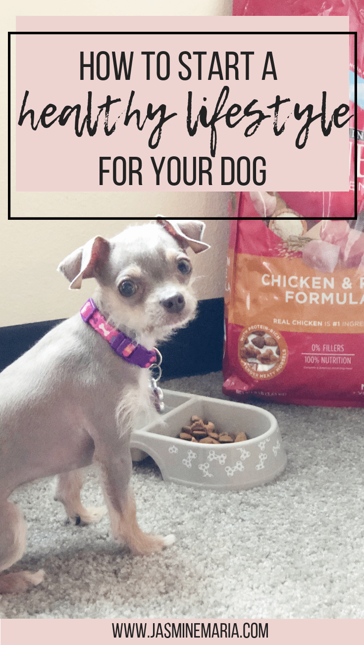 Starting A Healthy Lifestyle For Your Dog With Images Your Dog