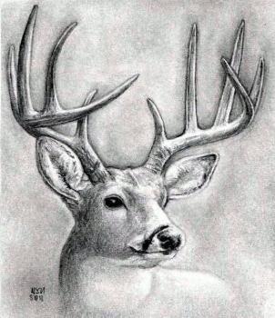 How To Draw A Deer Head Buck Dear Head Animal Drawings Drawings Deer Drawing