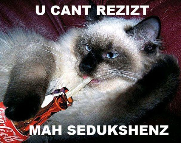 Funny Cat Drinking Meme : Cat drinking coke cute furry friends coke funny