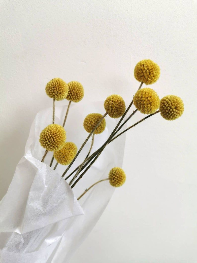 Dried Billy Buttons Bunch Yellow Craspedia 10pc Etsy In 2020 Billy Buttons Dried Flowers Home Floral Arrangements
