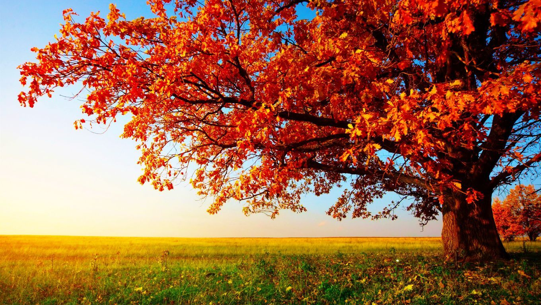 Beautiful Autumn Wallpaper For Interior Wall Decor Idea