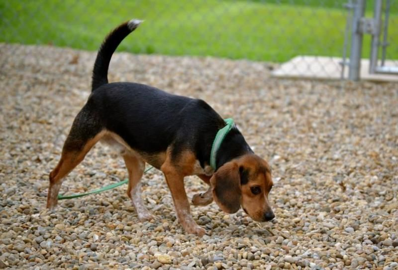 Puppies For Sale In Elizabethtown Ky Craigslist References