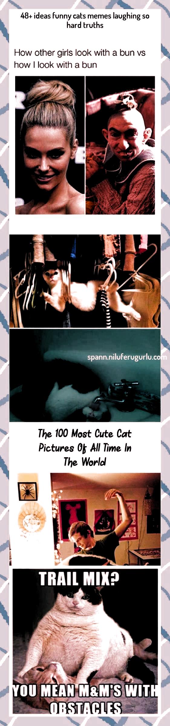 cat memes laughing so hard humor   cat meme