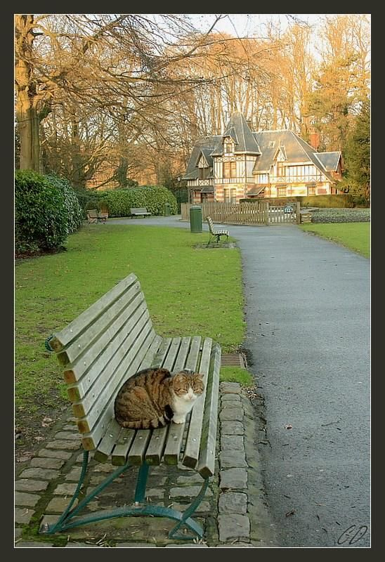 Cat on a Bench - CatherineD