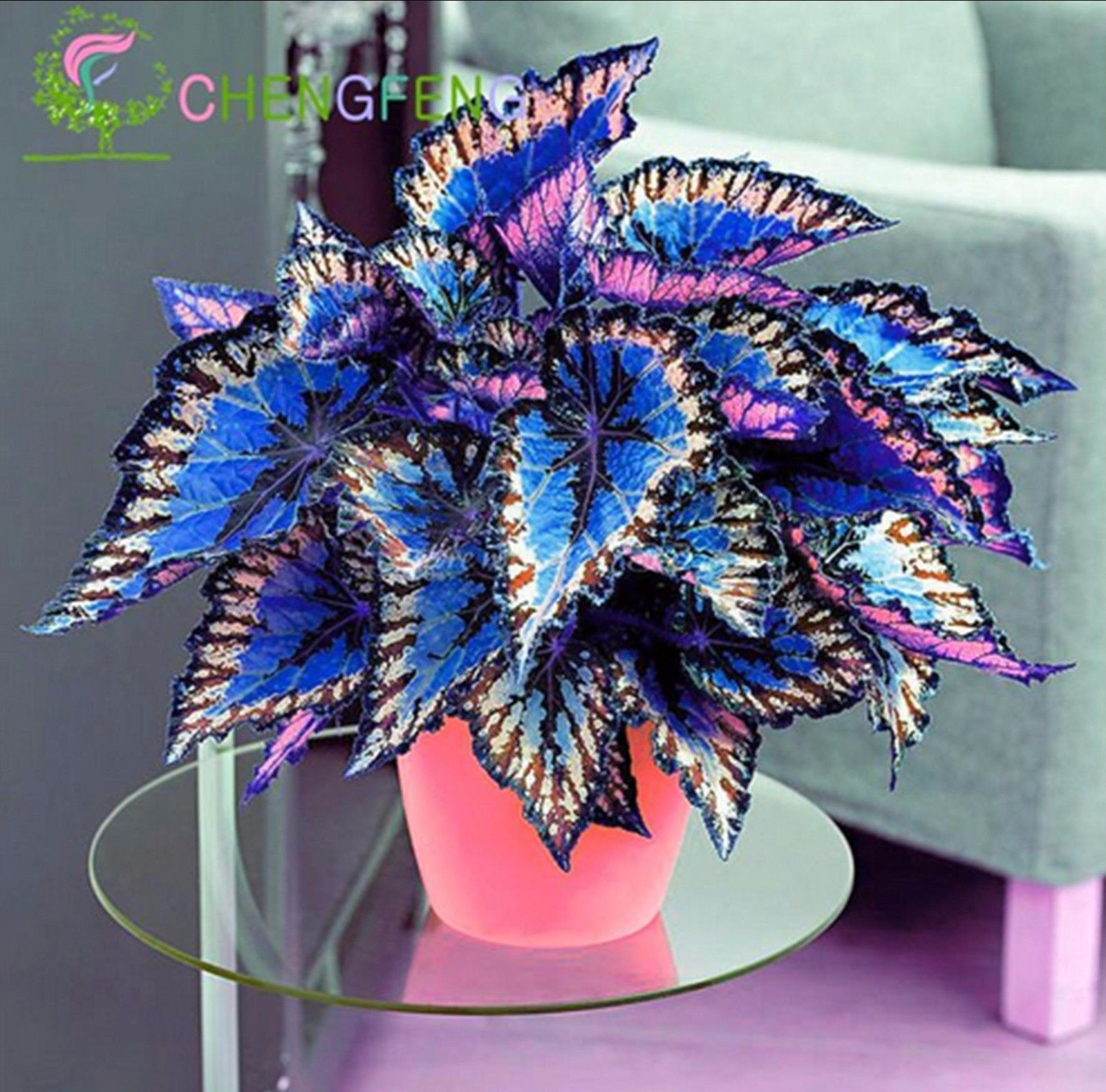 100 Pcs Japanese Bonsai Coleus Seeds Foliage Plants Perfect Color Rainbow Dragon Shipping Time To Us Ca South Korea Fr Foliage Plants Plants Bonsai Flower