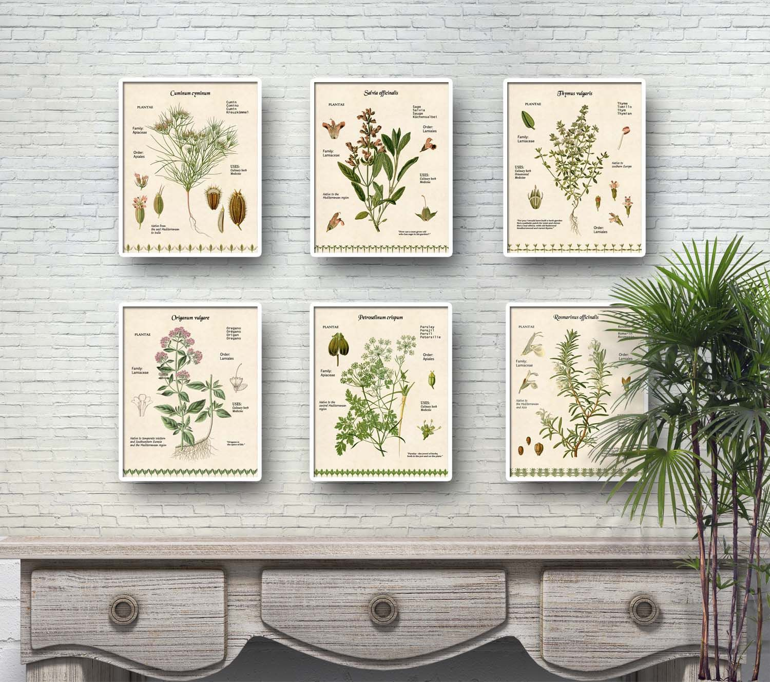 Culinary Herbs Prints For Kitchen Decor Rosemary Sage Thyme
