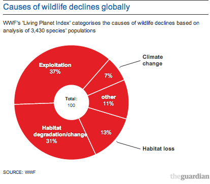 Earth has lost half of its wildlife in the past 40 years, says WWF