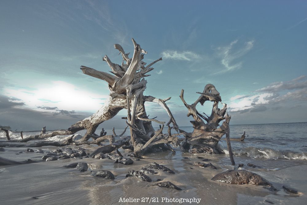 Black Rock Driftwood Beach Talbot Island Florida