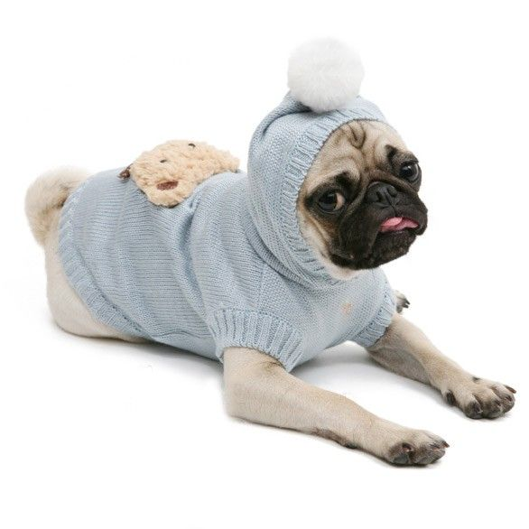 Does My Dog Really Need to Wear a Jacket in Winter? 7