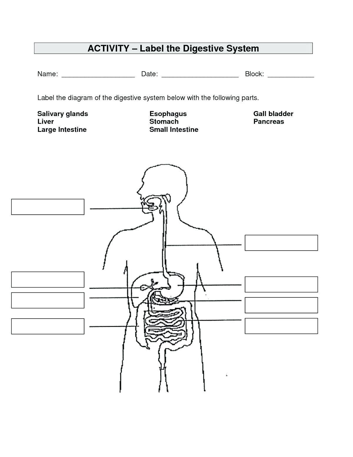 Unlabled Body Anatomy Worksheet