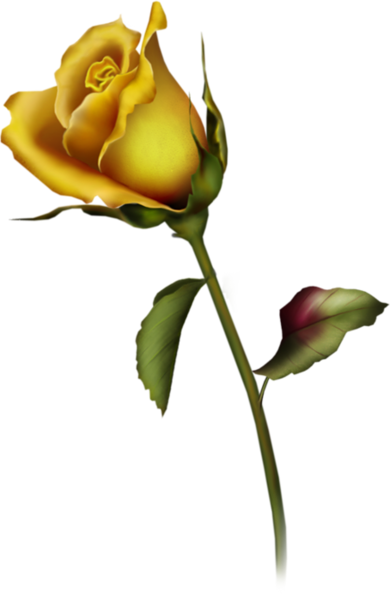 yellow rose bud clip art gallery free clipart picture roses png rh pinterest com yellow rose clip art yellow tea rose clip art