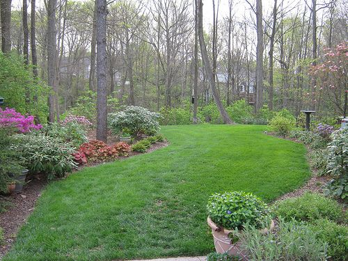 Landscaping A Wooded Lot Recent Photos The Commons Getty