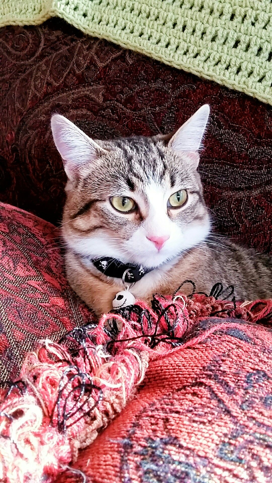 Loki The Therapy Cat Is Growing Up To Be A Handsome Young Boy I Love This Little Guy To Bits Rescuecat Catportrait Ta Kitten Love Kittens Cutest Baby Cats