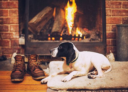 pin by davidson communities on animal house dogs cozy pets rh pinterest com Cozy by the Fireplace Cozy Fire