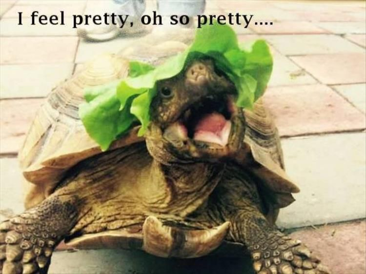 cce28853a3f22daadac57769695aaa5b morning funny animal pictures 21 pics animals and pets