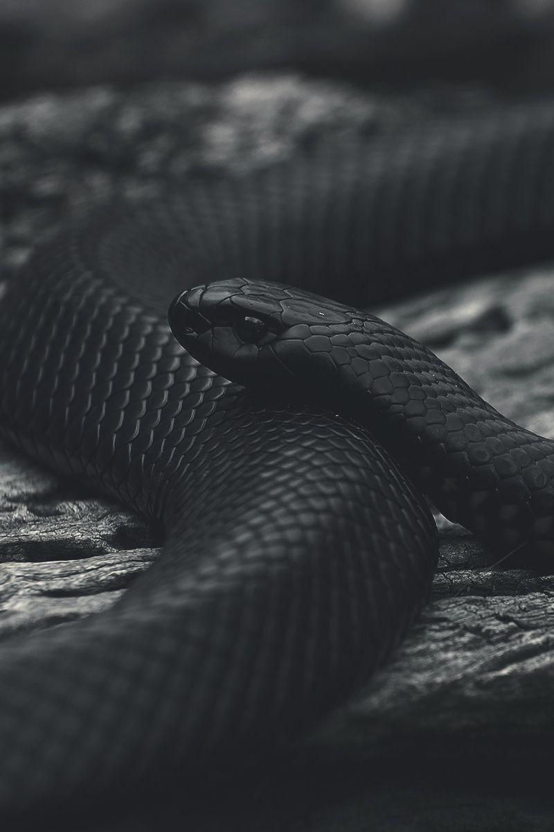 Therealdirtyflaws Snake Wallpaper Pet Snake Snake
