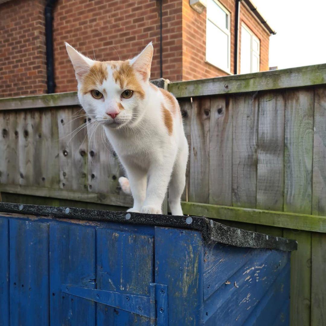 Model Shots Tomcats Cats Kittens Dogs Dogaccount Cataccount Model Pets Malemodel Animals In 2020 Animals Cats