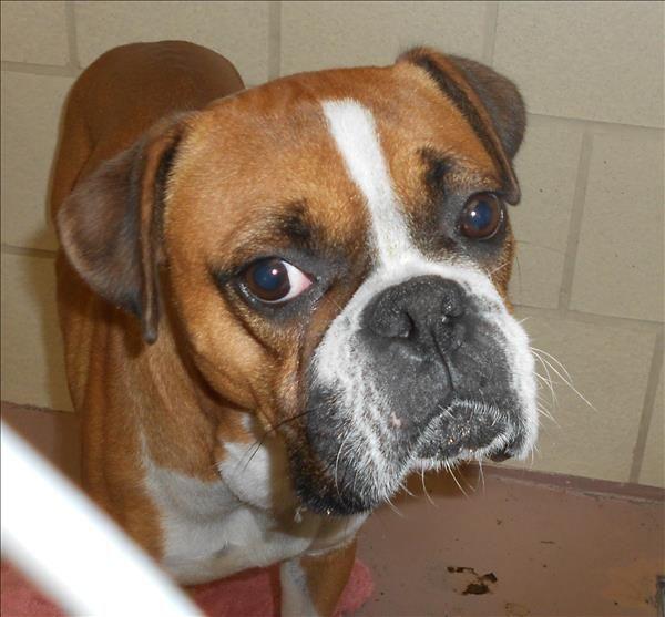 Houston Spca Adoption Spca Adoption Animals And Pets