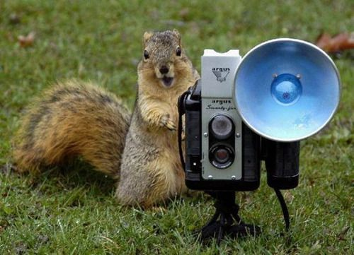 i just can't get enough of anything related to squirrels