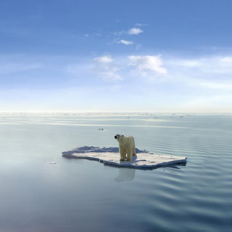 on a raft, stranded, alone, helpless | Polar bear, Polar bear wallpaper,  Save the polar bears