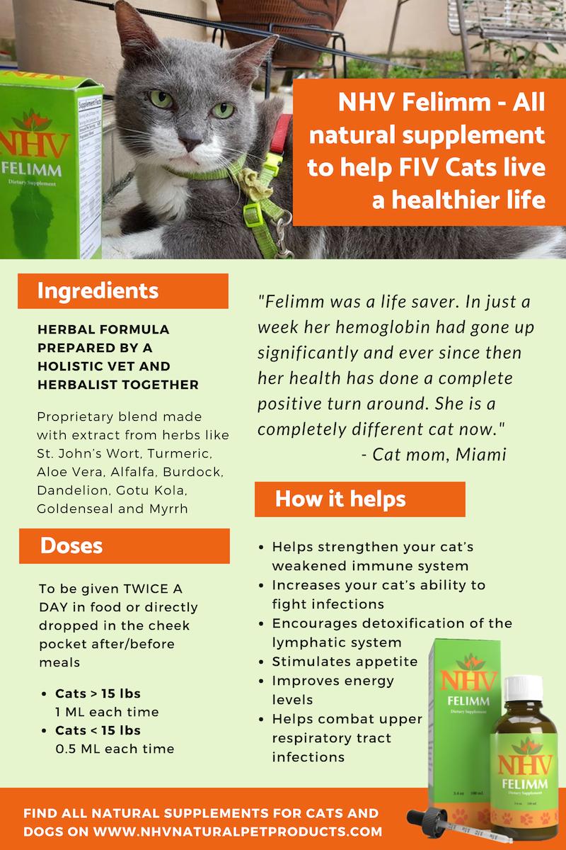 Pin On Dog Cat Infographics