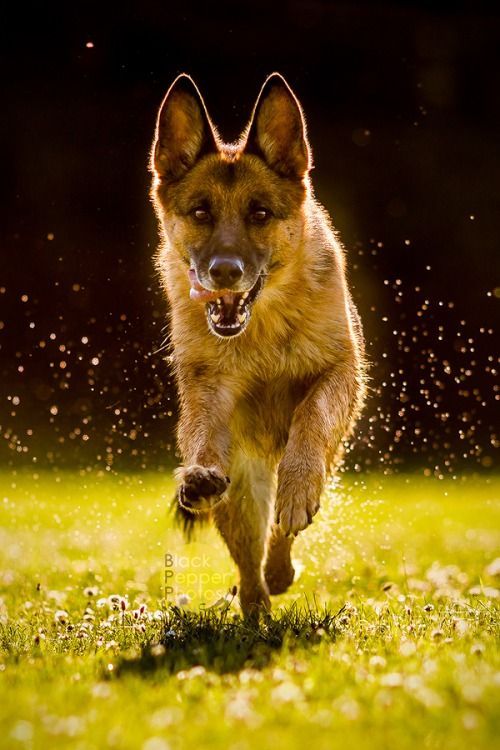 Пин от пользователя Irene на доске Собаки / Dogs ...