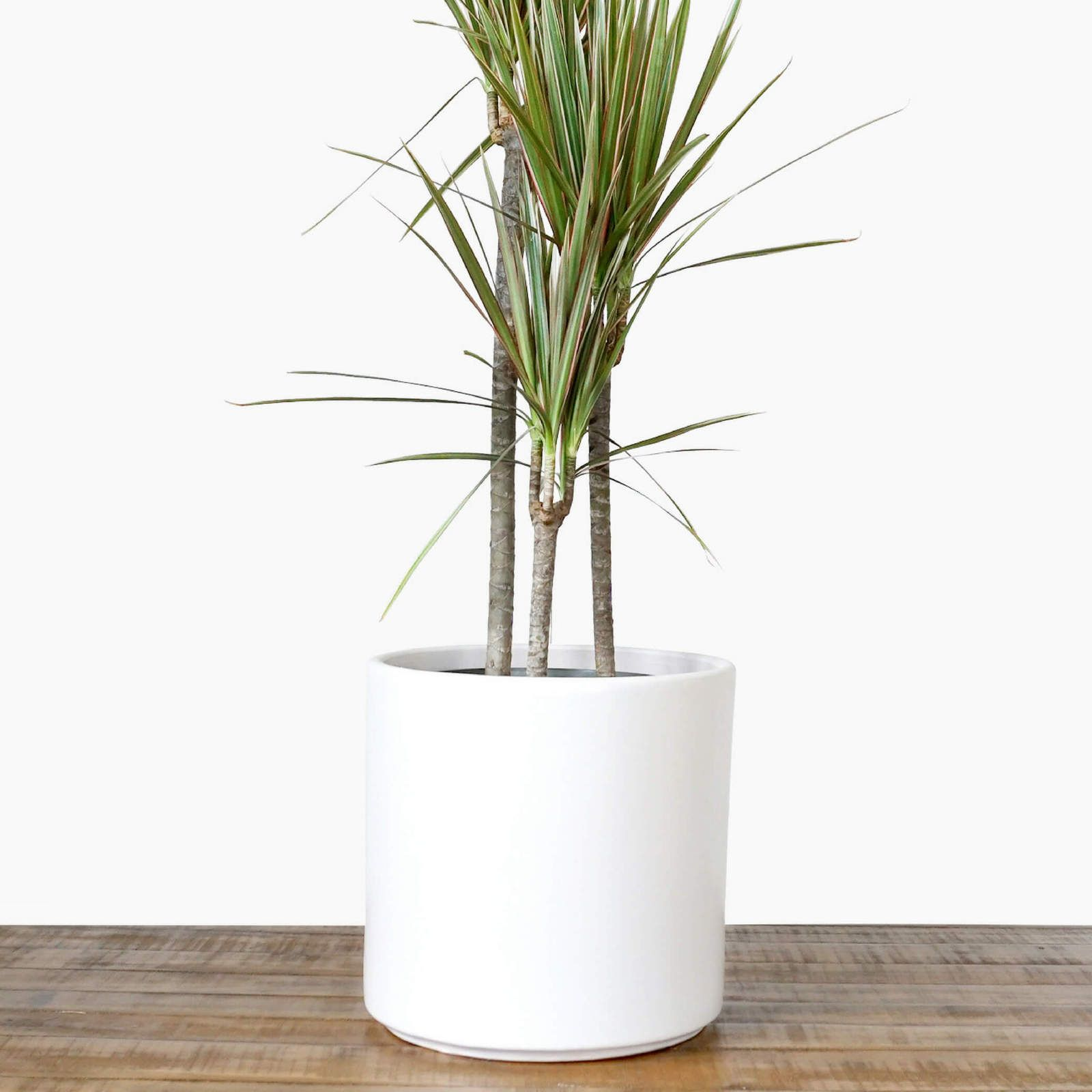 Large White Plant Pot Modern Planter Ceramic Indoor Outdoor Flower Pot Flower Pots Outdoor Indoor Plant Pots Outdoor Flowers
