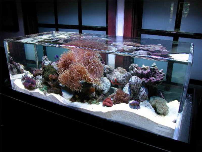 Interior Designs Ideas Lights Cool Wall Fresh Water Aquariums Tanks  Decorations Marine Fish Aquarium House Design