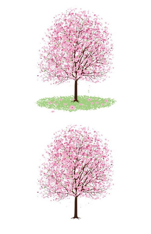 Pink Cherry Blossom Tree Vector | Trees, Cherries and Design elements