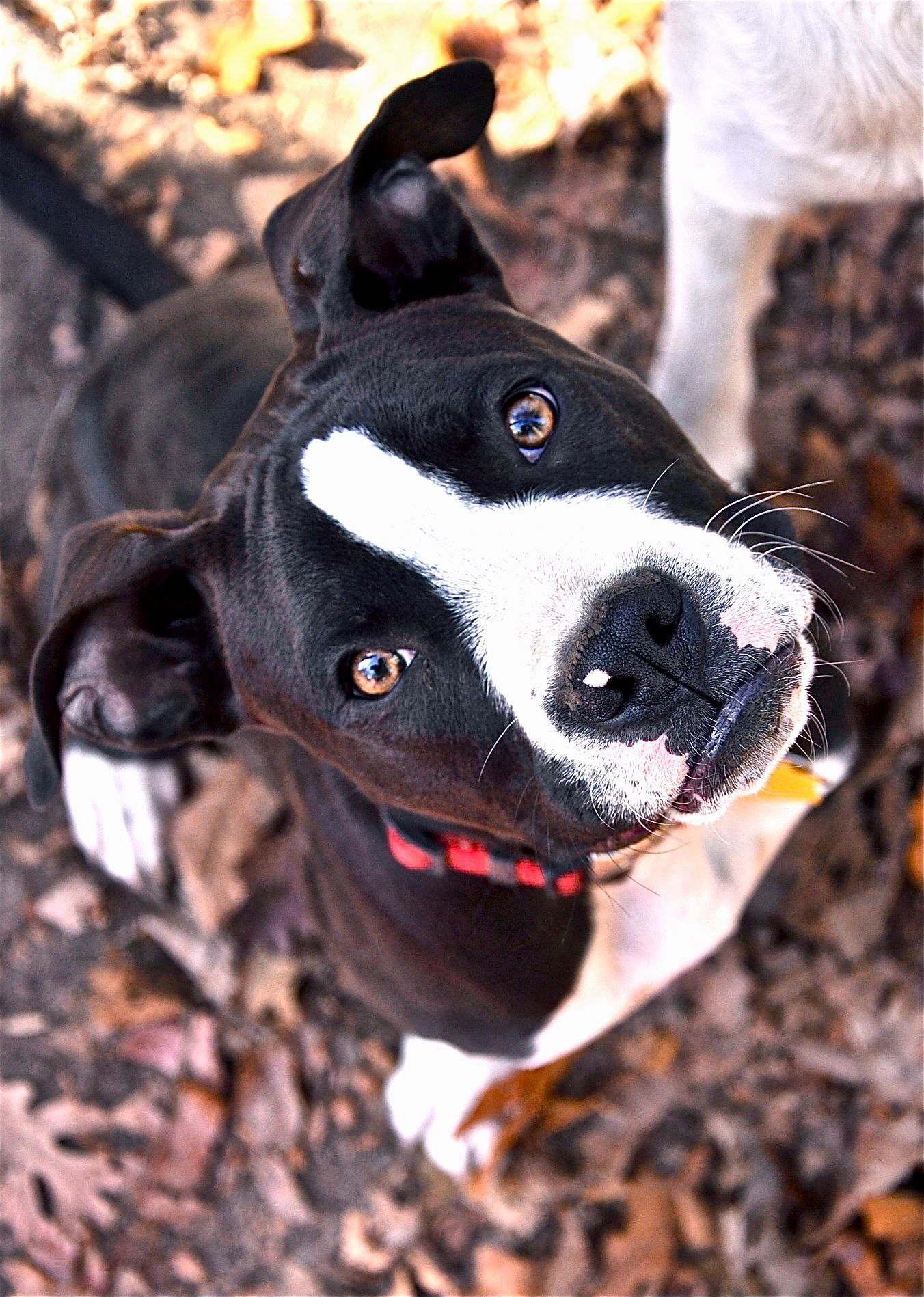 Donation/Adoption/Bake sale. Matthews, NC target/ACmoore