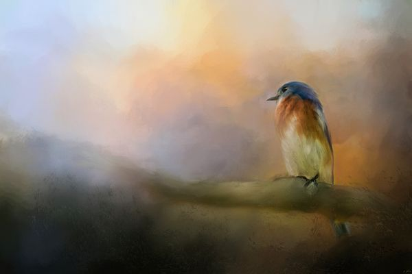 Bluebird painting - what a soft, lovely light!