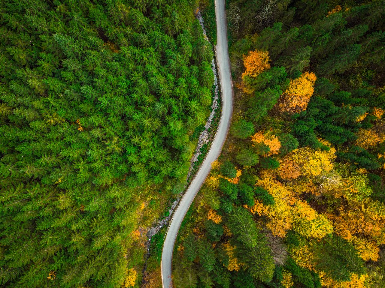 Colorful Forest And Curvy Road Aerial Drone View From Above Aerial Drone Aerial Aerial Photography Drone photo forest road aerial view