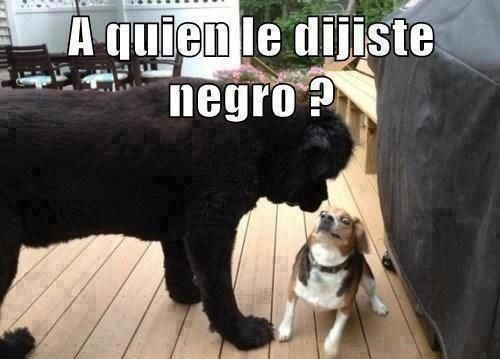 Perro Racista Animal Memes Funny Animals Funny Pictures