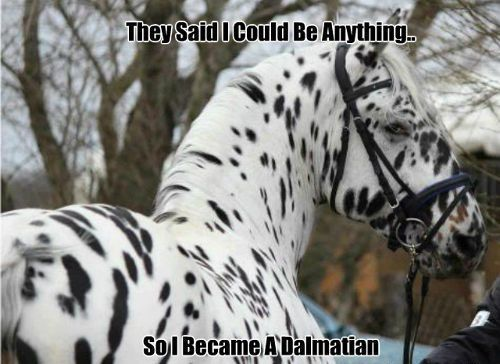 Does your horse have big aspirations? Write them down for them in a Horse Journal by Pathway Creations: http://pathwaycreations.com/store/Pet-Gifts/Horse-Journal