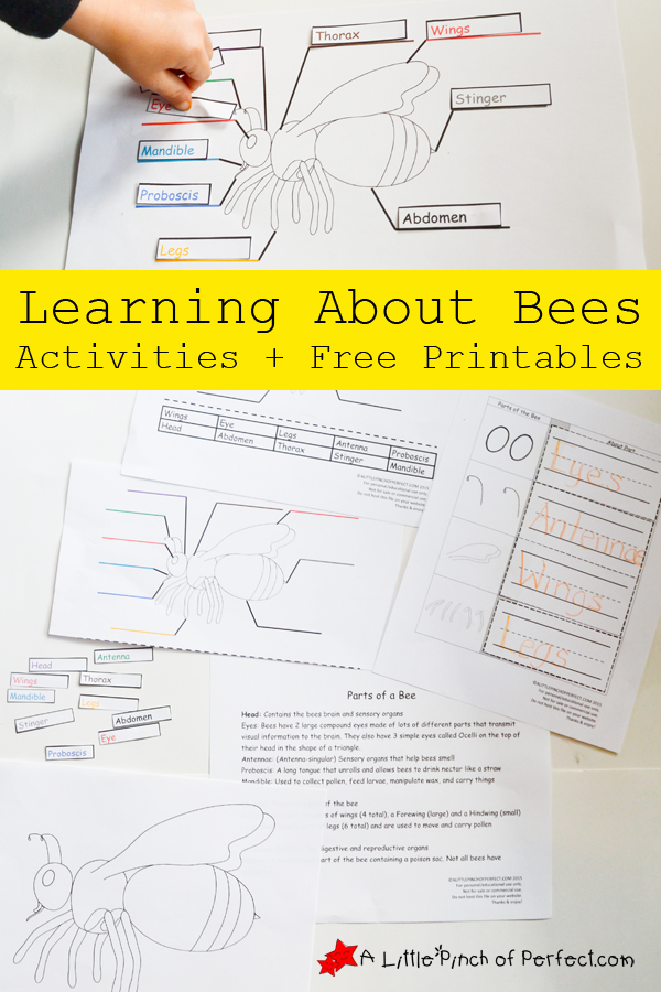 Learning About Bees Activities And Free Printable Free Printable