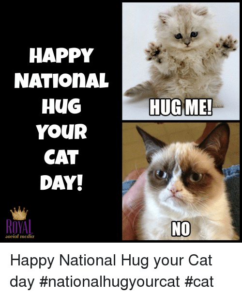 National Hug Your Cat Day Is Jun 4th Hug Your Cat Day National Cat Day Cat Day