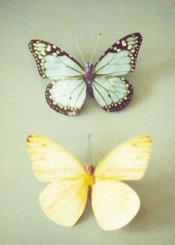 Pastel Butterflies set of 2 5x7\