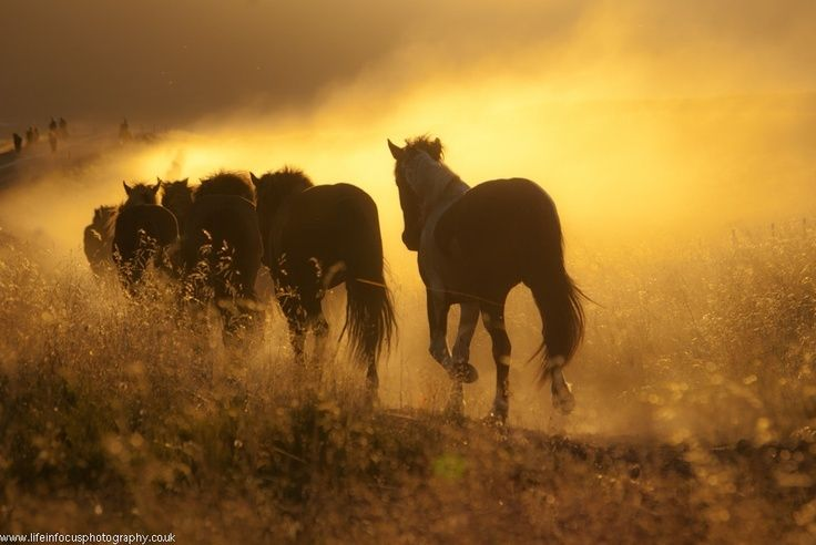 """5 Things that Wild Horses Can Teach Us about Horse Care by Horse Collaborative:  Does it ever seem like the better you take care of your horse the more likely it will get sick? Does all the great nutrition, veterinary, dental and farrier care you provide always translate into a healthy horse? If you are like most horse owners, you have thrown your hands up and said, """"Horses in…"""