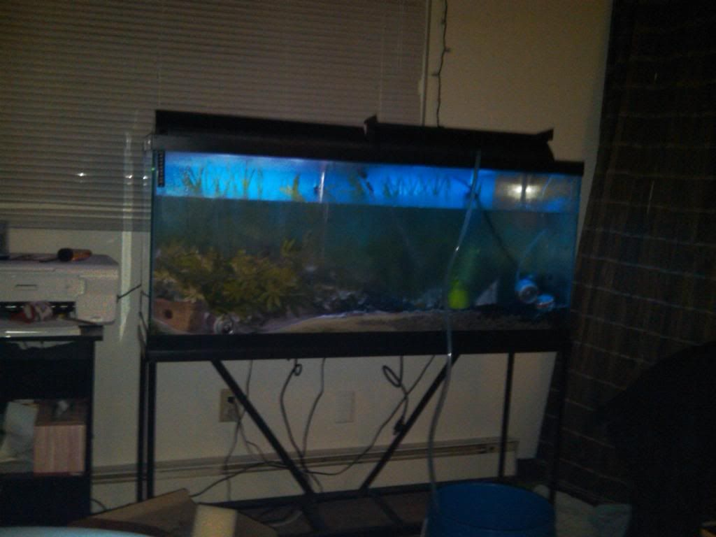Fake fish tank aquarium walmart - Simple Aquarium Stands Design Http Www Lookmyhomes Com Choosing