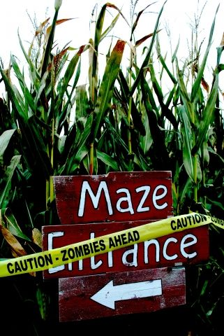 treinen farm corn maze and pumpkin patch ideas for pumpkin patch