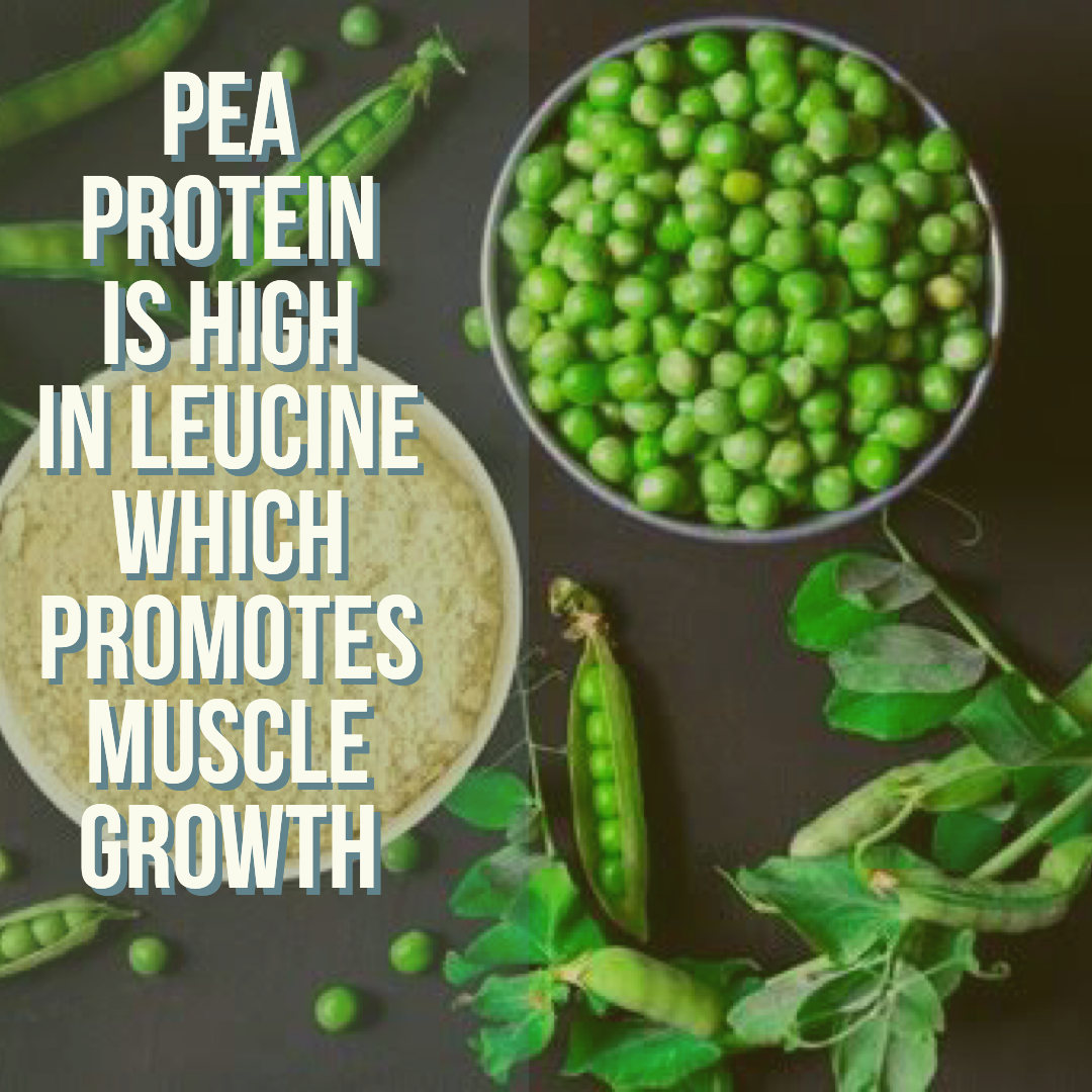 What Is Pea Protein Pea Protein Chia Seed Smoothie Protein