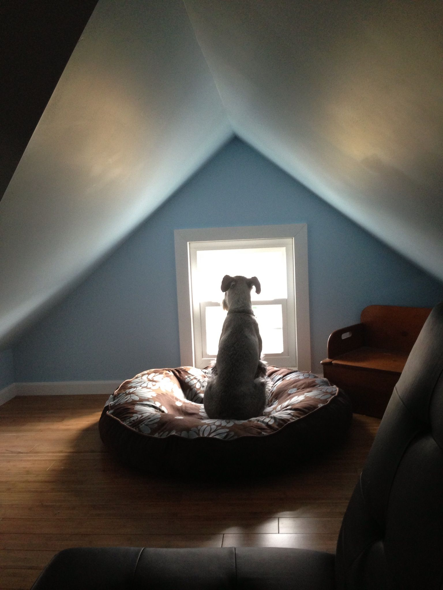 Small Attic small attic nook aka dog point - love! dogs would probably tumble