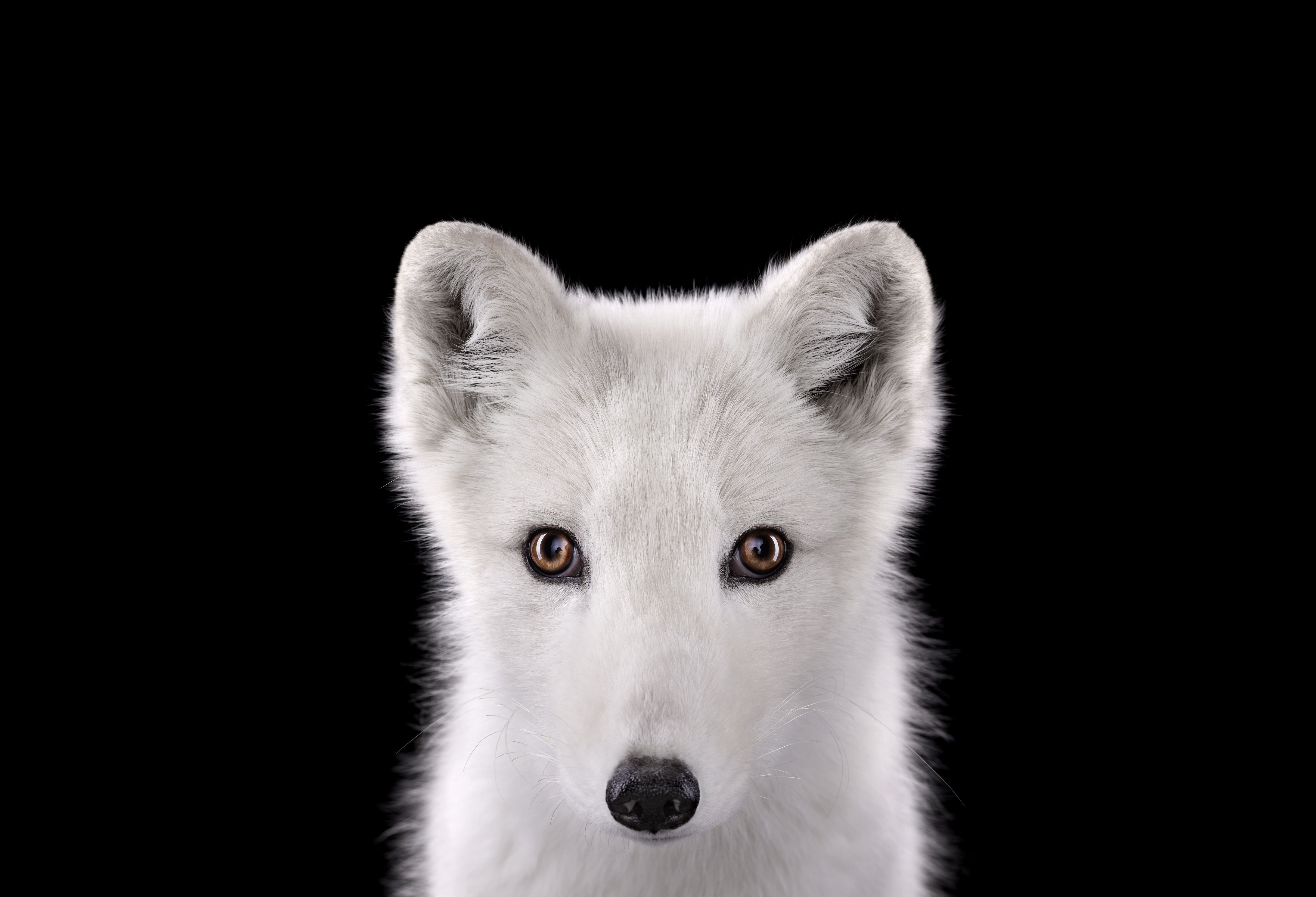 Incredible Studio Portraits Of Wild Animals By Brad Wilson: Pin On Brad Wilson Photos